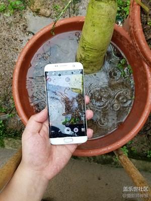 探索水世界——三星Galaxy S7水下拍摄