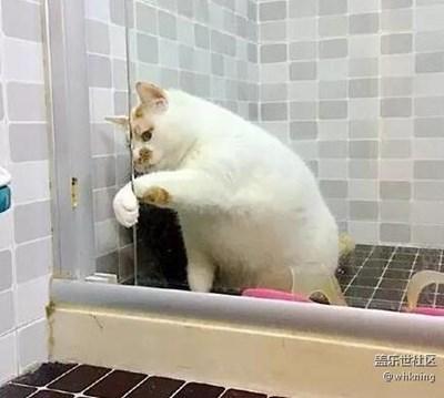 可爱的它+北京+网友家的小猫咪