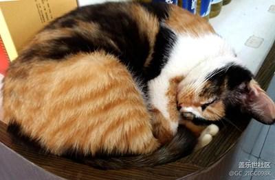 【可爱的它】+成都+睡猫