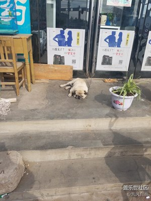 【可爱的它】+辽宁  +憨憨的狗狗