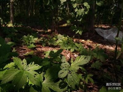 [三星A9高配]-丛林摄影教学