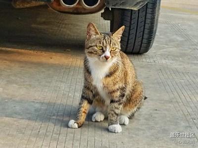 【S7拍摄】山东行遇到的猫猫狗狗们