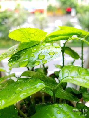 宁静夏天,一盆种子从发芽到枝繁叶茂