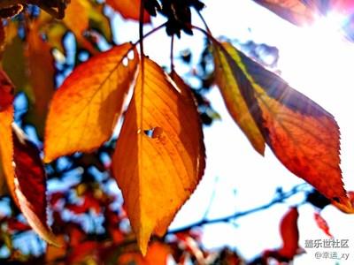 【摄影】秋日的色彩