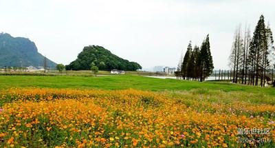 湘湖--那些花儿