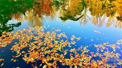 【S7】一池秋水,一影秋,一池落英,一世情