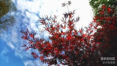 【霜叶红于二月花】+武汉+东湖景区的枫叶