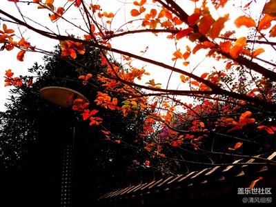【拍吧摄影周赛第十八期】霜叶红于二月花