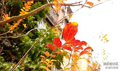 霜叶红于二月花+绵阳市+山野秋霜漫天红