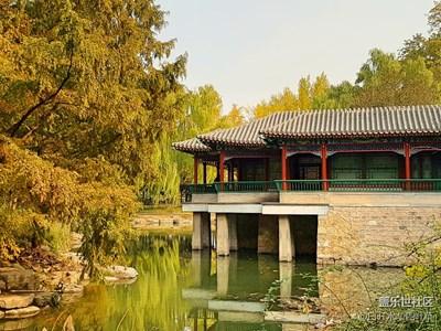【霜叶红于二月花】+北京+中山公园银杏古道,泼金嵌红的诱惑