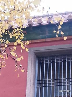 【霜叶红于二月花】+北京+随拍
