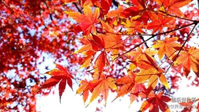 今天主要拍拍树叶