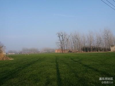 【家乡美】+泗阳+绿油油的田地
