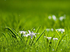 【拍吧周赛】第25期:拍出你身边的春色