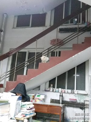 图书馆的老猫