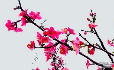 春花、春水、春来的人