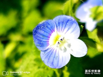 我眼中的世界+上海+春意