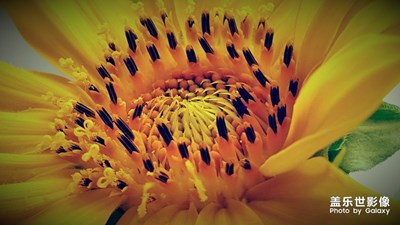 《慢生活》+周口+向阳花(向日葵)
