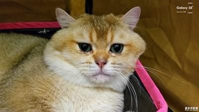 【三星盖乐世 S8+】猫展上那些花絮