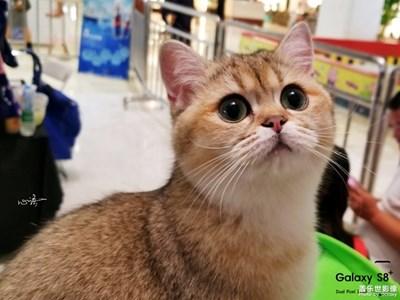【三星盖乐世 S8+】我爱S8+,我爱猫咪,我爱用S8+拍猫咪