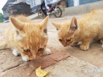 猫咪与薯片