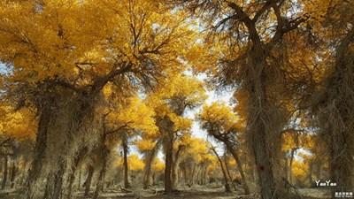 《我眼中的十一月》+大漠胡杨