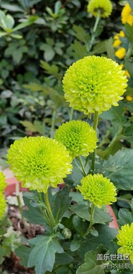生态园美丽的花花