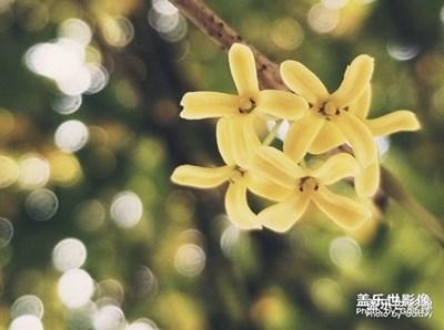 盖乐世影像周赛第41期——拾忆获奖名单