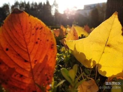 昨夜西风过庭院,吹落黄叶片片金🍂🍁