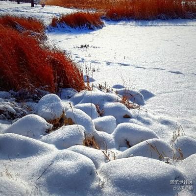 盖乐世周赛第43期—— 不一样的冬  不一样的南北
