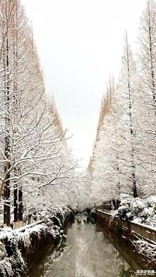年前的一场大雪