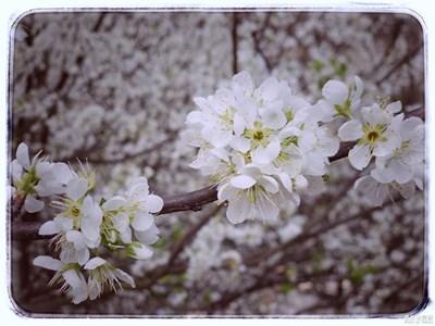 【春风】+春之觉醒