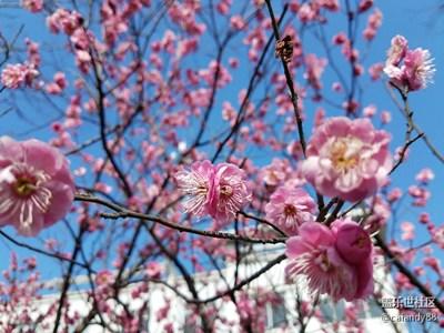 【春风】+花开满枝头