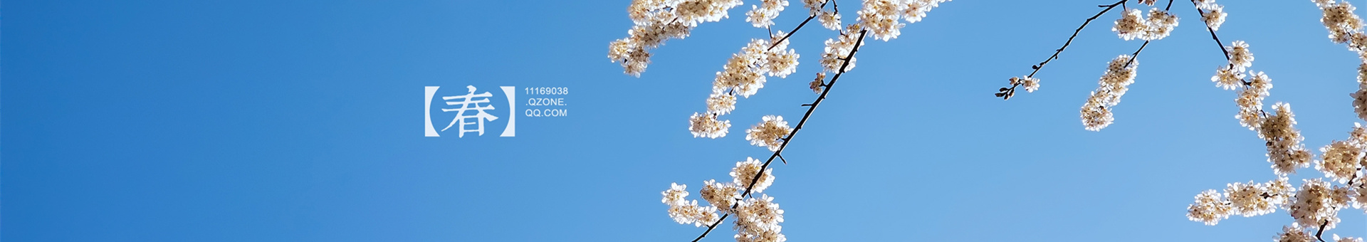 【春风】+樱桃花开