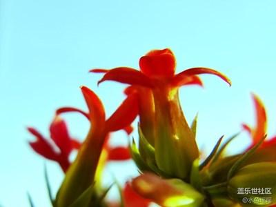 【春风】+温室里的春日