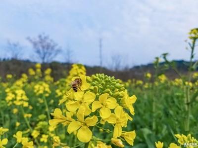 春风错过了【春风】——蜂恋花