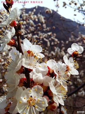 春满连云岭(之二)