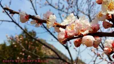 春满连云岭(之一)