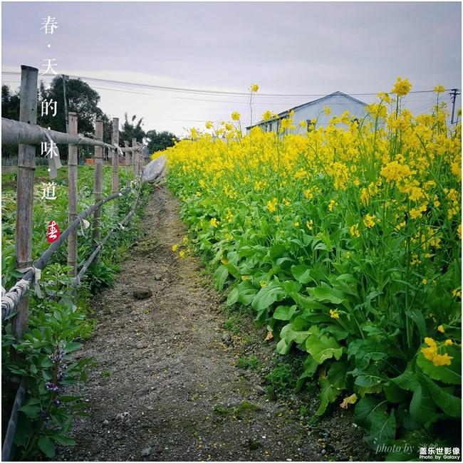 每周精帖汇【第90期:春天已到 万物复苏 你踏青了吗 】