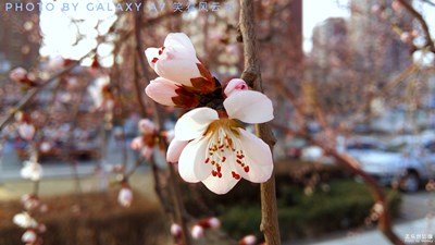 桃花春色暖先开