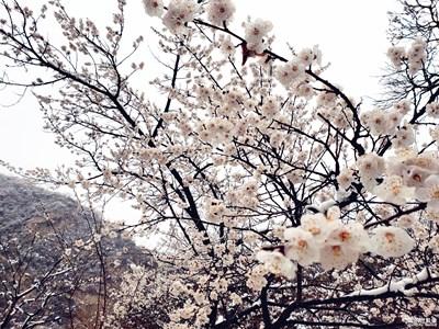 盖乐世S9+随拍 记北京神堂峪春雪