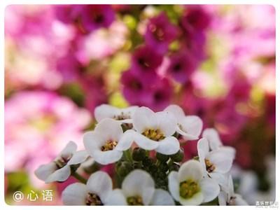 【三星盖乐世S8+】陌上花开