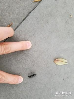 好大一只蚂蚁