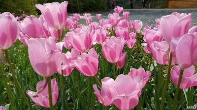 【人间四月天】春色满园