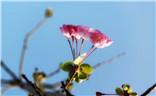 人间四月天——静听花开