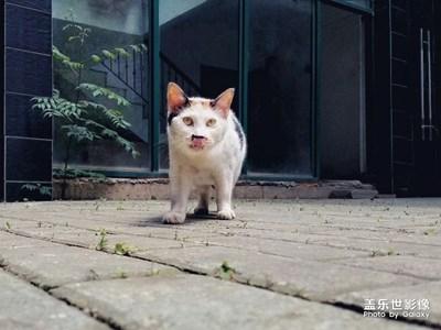 偶遇流浪猫…