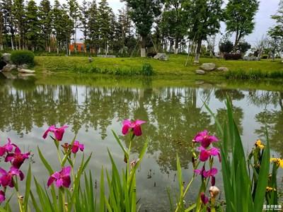 【人间四月天】  青青河边游