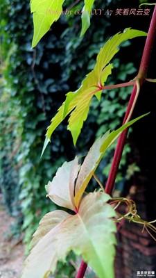 叶子是一个故事