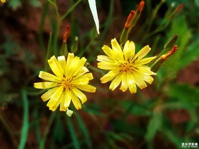 光与影……小花也有小花的精彩