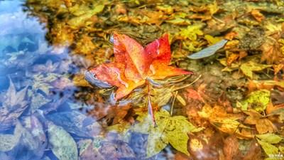 盖乐世摄影周赛第54期——叶子的故事